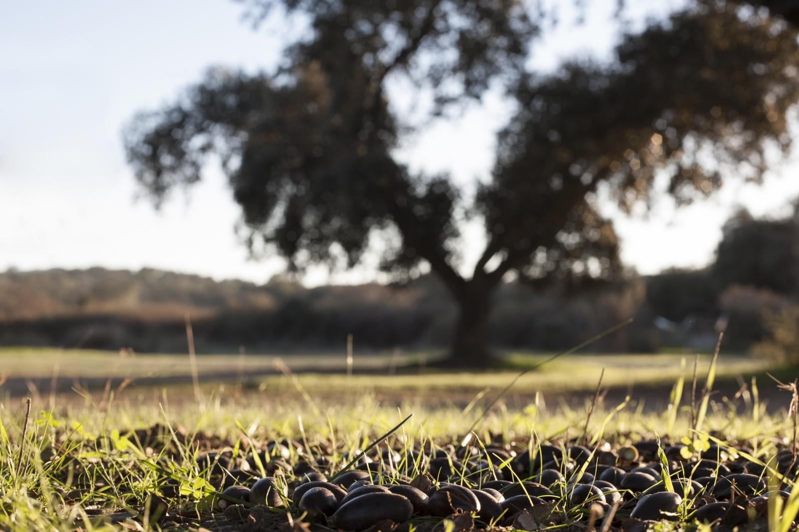 La UE redacta una directiva contra los abusos en el sector agrario